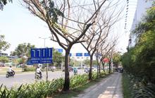 TP HCM: Điều tra vụ nhiều cây xanh bị đầu độc