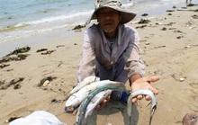 Khả năng 29-6 công bố nguyên nhân cá chết tại Miền Trung
