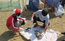 Sợ hãi với hàng trăm xác vịt chết thả trôi sông