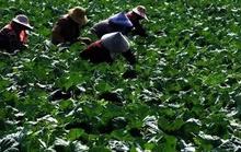 Thán phục trước cách làm nông nghiệp sạch lạ đời của người Nhật
