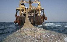 7 tàu cá Trung Quốc bị bắt ở Tây Phi