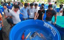 Tưng bừng hội thi cá Koi tại Thảo Cầm Viên