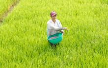 Bảo hộ DAP trong nước, nông dân chịu thiệt?