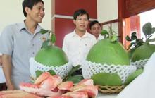 Xuất khẩu trái cây: Công nhiều, lời ít