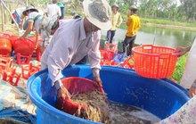 Xuất khẩu nông, lâm thủy sản bị cạnh tranh gay gắt
