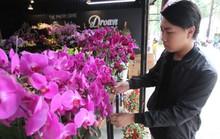 Thị trường hoa Tết tăng nhiệt