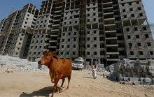 Nghịch lý bò tại Ấn Độ