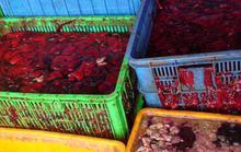 Bắt quả tang 3 xe tải đổ nội tạng bẩn xuống sông Đồng Nai