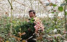 Chợ hoa ngàn tỉ tại TP HCM và Đà Lạt vận hành như thế nào?