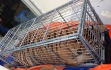 Mua hổ sống nặng 200 kg từ Nghệ An ra Hà Nội nấu cao