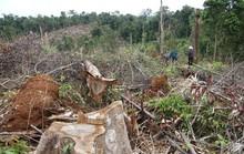 Khởi tố vụ án phá gần 7 ha rừng ở Lâm Đồng