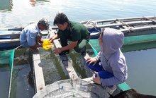 Kiểm tra chất lạ trên sông Chà Và