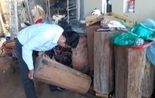 Chỉ đạo làm rõ vụ gỗ thông đỏ trong nhà trưởng ban quản lý rừng
