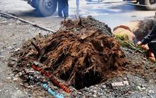 Cây xanh bật gốc níu dây điện, gây nổ gần đường Nguyễn Huệ