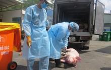 Cán bộ thú y chỉ chủ quan, sơ hở trong vụ 3.750 con heo bị tiêm thuốc an thần!