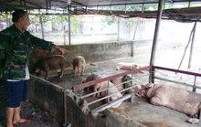 Dịch bệnh gia súc, gia cầm trở lại