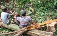 Thanh tra chuyển mục đích sử dụng rừng ở Phú Yên