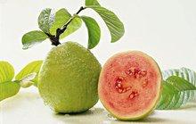 8 lợi ích tuyệt vời từ trái ổi