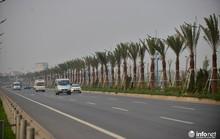 Công ty Cây xanh Hà Nội lý giải việc trồng chà là đường ra Nội Bài