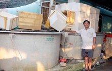 Tự tin trên đồng quê: Mặn duyên với cá chình