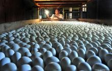Ấp trứng vịt lộn, một thôn thu gần 200 tỉ đồng mỗi năm