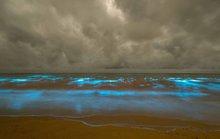 Úc: Giải mã hiện tượng biển rực sáng màu xanh