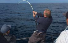 Câu được cá ngừ vây xanh khủng rồi thả xuống biển