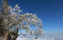 Nhiệt độ xuống -7 độ C, băng tuyết phủ trắng đỉnh Fansipan