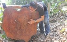 """Vụ phá rừng phòng hộ Quảng Nam: Tỉnh chỉ đạo """"nóng"""""""