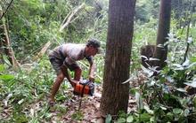 Tội nào cho phá rừng hợp pháp?