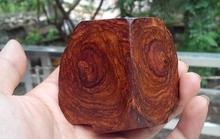 Giải mã bí mật tại sao cây gỗ sưa đắt hơn vàng