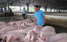 Đừng nên chờ thị trường Trung Quốc cứu thịt heo