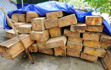 Tàn sát rừng biên giới Việt - Lào
