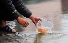 Cách chọn mua cá chép để cúng ông Công, ông Táo