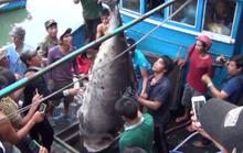 Sướng chuyện câu cá ngừ đại dương ở Hòn Rớ