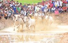 Lý do khiến cả rừng người đến xem đua bò Bảy Núi