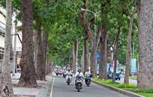 Cấm xe trên nhiều tuyến đường trung tâm TP HCM ngày 8-8