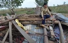 Giành voi cái, voi rừng tấn công voi nhà đến chết