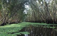 Lung linh mùa nước nổi ở An Giang