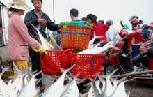 Giây phút ngư dân Quảng Trị chạm mặt đàn cá trời cho  6 tỉ