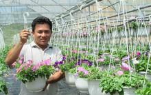 Làm giàu nhờ hoa giống