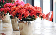 5 loại hoa đẹp lại dễ sống nên trồng ngay để kịp chơi Tết