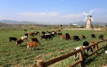 Bước tiến mới trong lĩnh vực organic của ngành sữa Việt