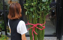 Hoa hồng thân cao, giá nửa triệu vẫn cháy hàng dịp Valentine