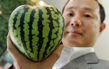 """Nhật Bản: """"Siêu trái cây"""" hàng chục ngàn USD hút khách"""