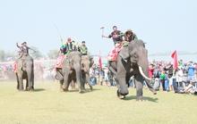 Đã mắt xem những chú voi đua tài