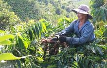 Cà phê Việt bán 2 USD, Starbucks mua về bán... 200 USD