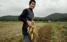 Mùng 3 Tết, nông dân nô nức xuống đồng lấy may