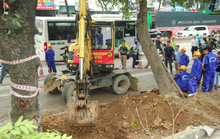 Bắt đầu chặt hạ gần 1.300 cây xanh trên đường Phạm Văn Đồng