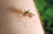 Mắc sốt xuất huyết 3-4 lần thì hết sợ muỗi?